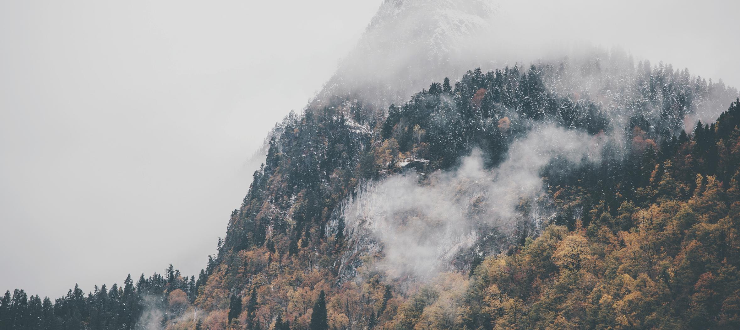 las_msp_Aktuelles_Nebel-Wald